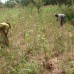Femmes au travail dans les champs